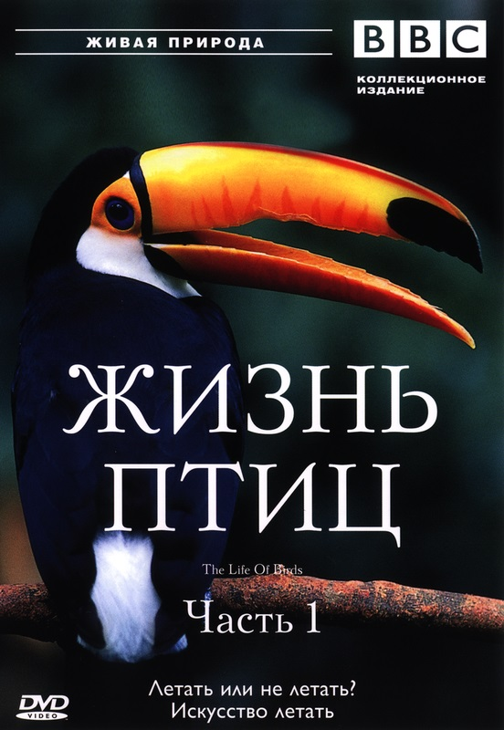 BBC: Жизнь птиц