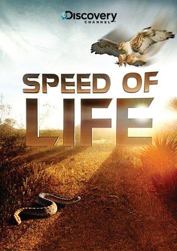 Discovery: Скорость жизни